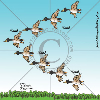 lessons from geese, cartoon of geese flying in formation, geese flying cartoon illustration