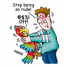 Image result for rude parrot
